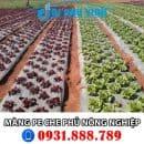 Màng phủ nông nghiệp - Màng pe che phủ nông nghiệp. Lh đặt hàng 0931888789